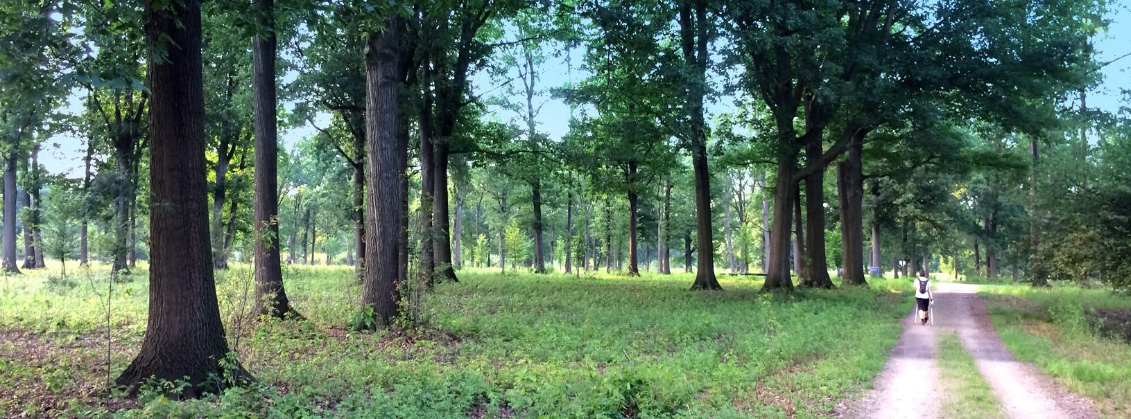 Parco di Stupinigi
